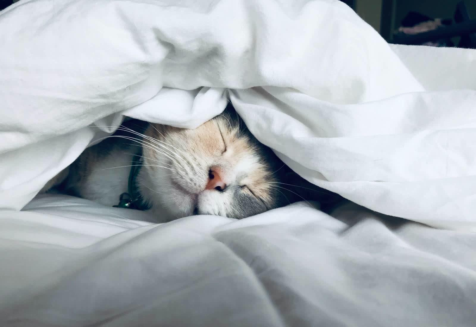 Immagine Cani e gatti dopo il lockdown: rischio solitudine. Ecco cosa fare 1